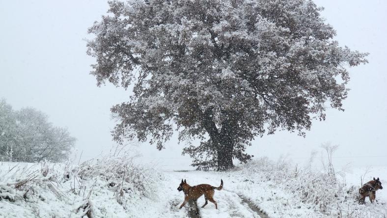 Két kutyáját hagyta a hatalmas viharban - képünk illusztráció! /Fotó: Northfoto