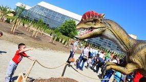 ŠETNJA KROZ PRAISTORIJU Otvoren Dino park u Novom Sadu