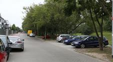 Nie wytną drzew żeby zbudować parking