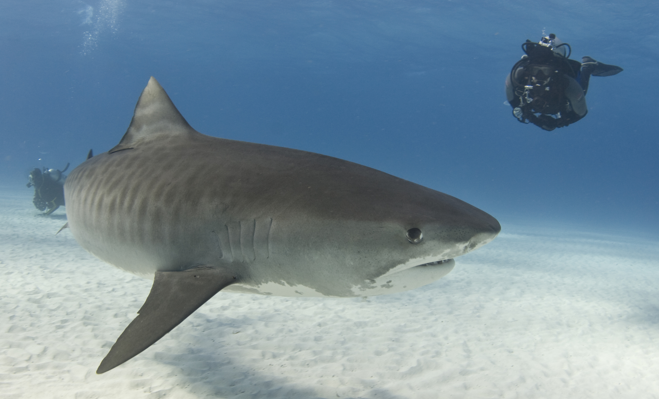 hogyan lehet sok pénzt keresni hangri cápa)