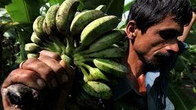 Indie - bananowe królestwo
