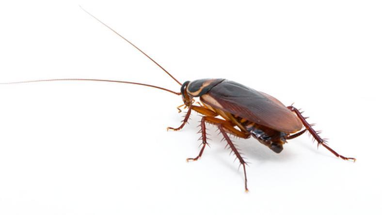 Ön nevezett már el rovart? /Fotó: Northfoto