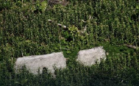 Krovovi koliba u kojima žive pripadnici nepoznatog plemena
