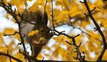 Jesen stigla na severnu Zemljinu poluloptu