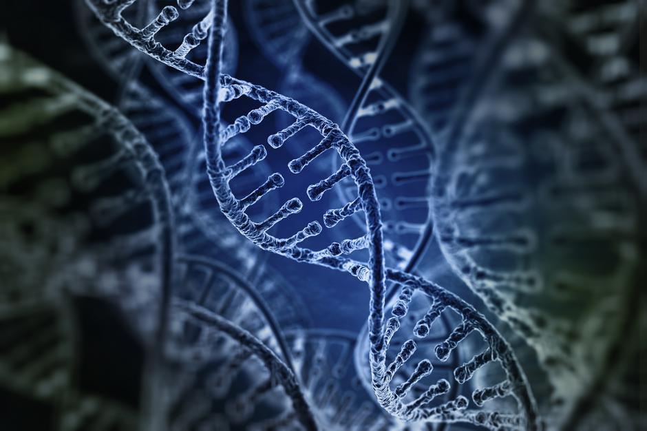 Genotyp określa tendencje organizmu do tolerancji pokarmowych