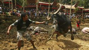 Indonezja - Rambu Solo - krwawy pogrzeb