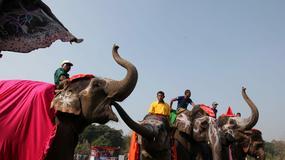 Nepal - konkurs piękności dla słoni
