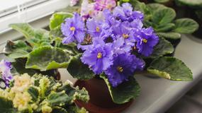 Dobra energia roślin: osiem kwiatów doniczkowych, które emitują jej najwięcej