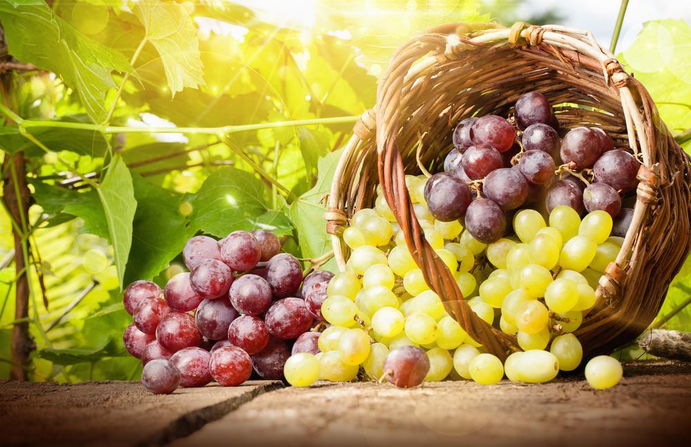 látás és szőlő)