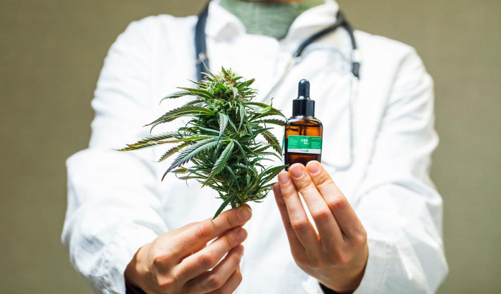 Drogok és veszélyeik: a cannabis