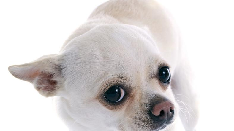 Vannak, akik ezt a kutyust is képesek lennének bántani / fotó: Northfoto