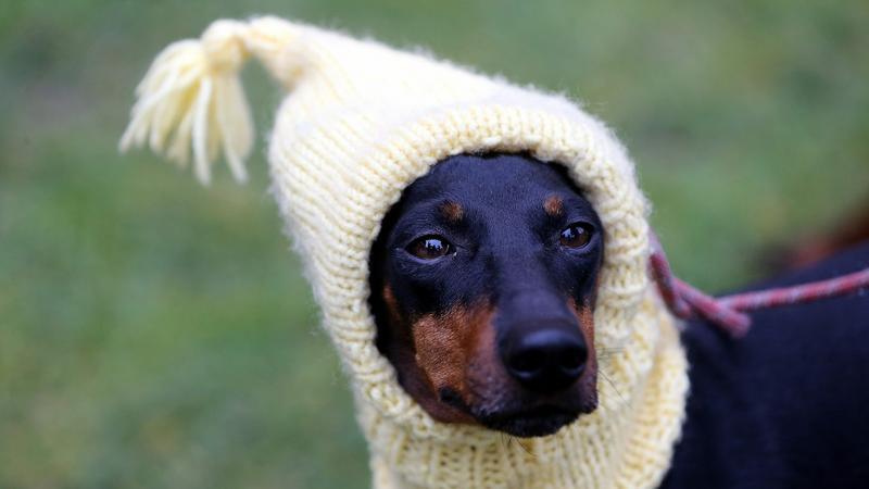 Birminghami kutyakiállítás - Fotó: MTI