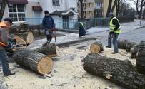 Kto tak naprawdę zarabia na wycince drzew?