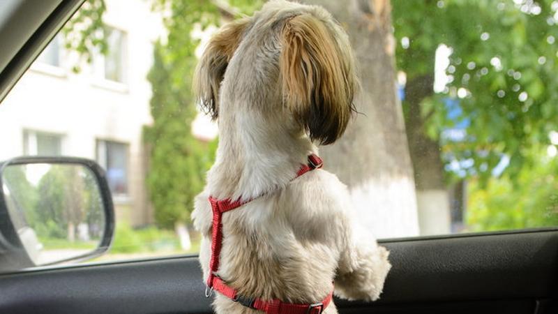 Nie zostawiaj psa w samochodzie