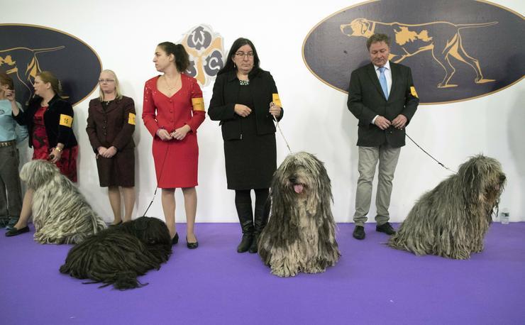 Ez a kutyaszépségverseny az Egyesült Államokban a legnagyobb/ Fotó: MTI