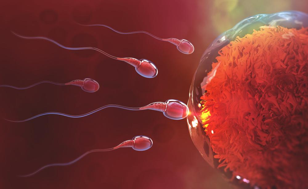 Vagyis petesejtek és paraziták, Emberi papillomavírus férfiaknál fotótünetek