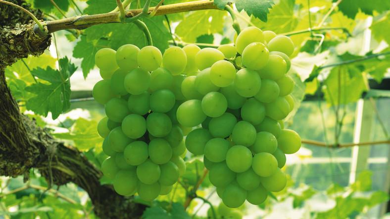 A szőlőmag és a fogyás