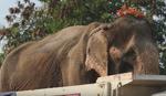 Kako je za zlostavljanu slonicu Sontaju iznenada stigla SLOBODA