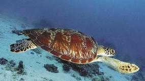 Gdzie nurkować: Wyspy Braci, Egipt