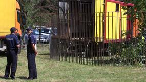 """Fundacja zabrała okaleczonego niedźwiedzia z cyrku: """"to pierwsza taka akcja w Polsce"""""""