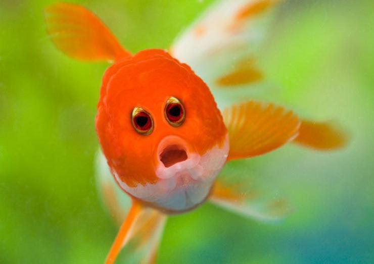 A halaknak jellemzően oldalt van a szemük, eléggé különös élmény lenne, ha így néznénk velük szembe / Fotó: boredpanda.com