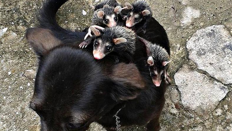 Fotó: boredpanda.com