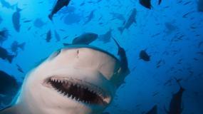 Gdzie nurkować: Australia: rekin zabił płetwonurka