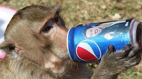 Tajlandia - małpia uczta