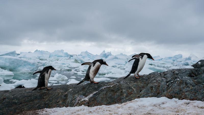 Pingvinek az Antarktiszon / Fotó: Profimedia-Reddot