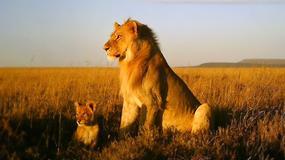 Tanzania - Park Narodowy Serengeti - bezkrwawe pułapki na zwierzęta