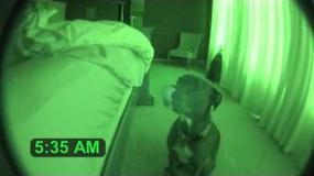 Hit internetu: Oto najskuteczniejszy budzik na świecie [WIDEO]