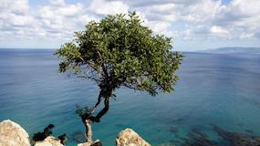 Pierwszy raz na Cyprze
