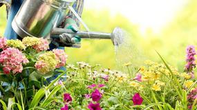Jak nie należy podlewać kwiatów?