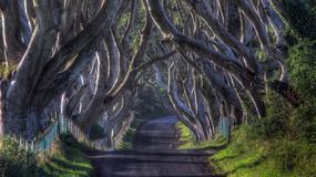 The Dark Hedges - najpiękniejsza droga w Irlandii Północnej