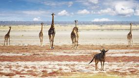 Gdzie jechać na wakacje w 2015 roku? Najlepsze miejsca wg Lonely Planet's Best in Travel 2015