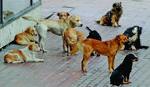SDS: Za dva meseca 11 dece završilo u bolnici zbog ujeda pas lutalica