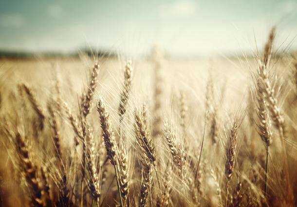 Drogocenne zboże i cała prawda o kwasie fitynowym