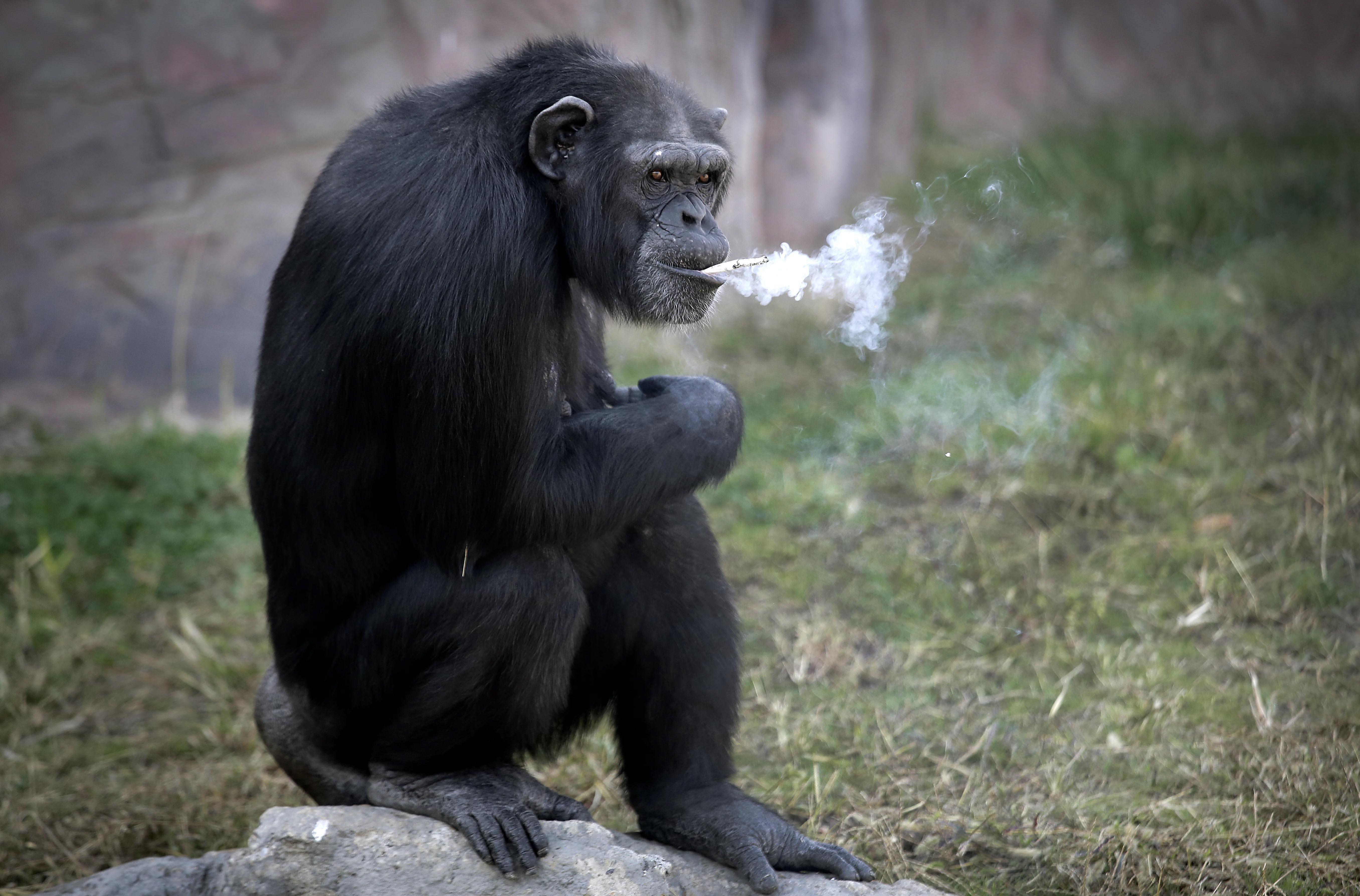 Egy nem mindennapi majom 391 - Egy Nem Mindennapi Majom 391 28
