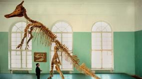 Tajemnice hadrozaura