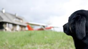 Pilots N Paws - samoloty dla... zwierząt