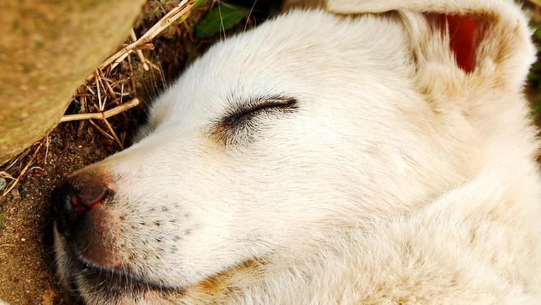 Képünk illusztráció: brutálisan végzett a kutyával a kiskorú /Fotó: Northfoto