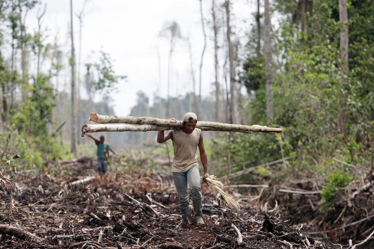 A fakitermelés nem csak az élővilág pusztulásához, de a levegő szennyezéséhez is hozzájárul/ Fotó: EUROPRESS-GETTYIMAGES