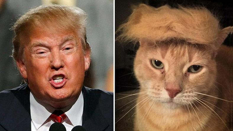 A cica kedves állat, vajon Trump is kedves?
