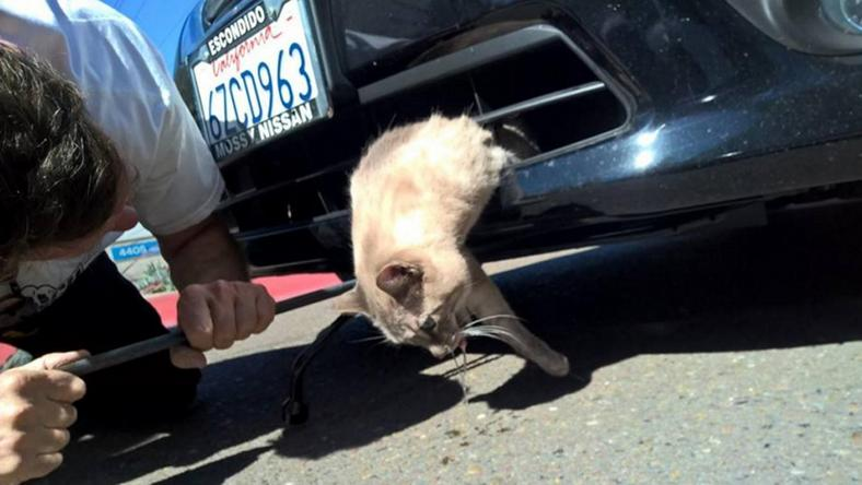 Gnocchi, a cica valószínűleg élete legrosszabb napján van túl /Fotó: Facebook