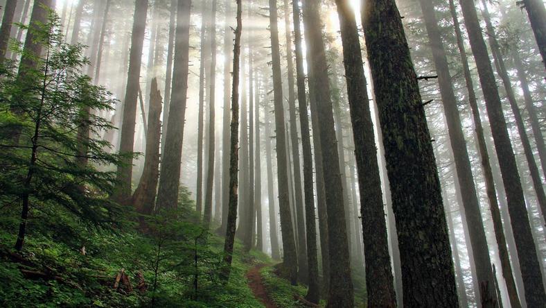 ijesztő hang jön az erdő mélyéről /Fotó: Profimedia-Reddot