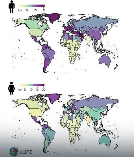Koliko su ljudi prosečno porasli u proteklih 100 godina