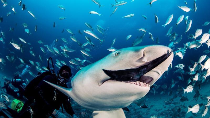 Cápa etetés kézből / Fotó: Profimedia-Reddot