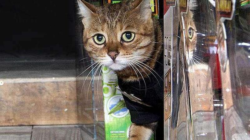 A világ legvérmesebb biztonsági őre: Egy macska!