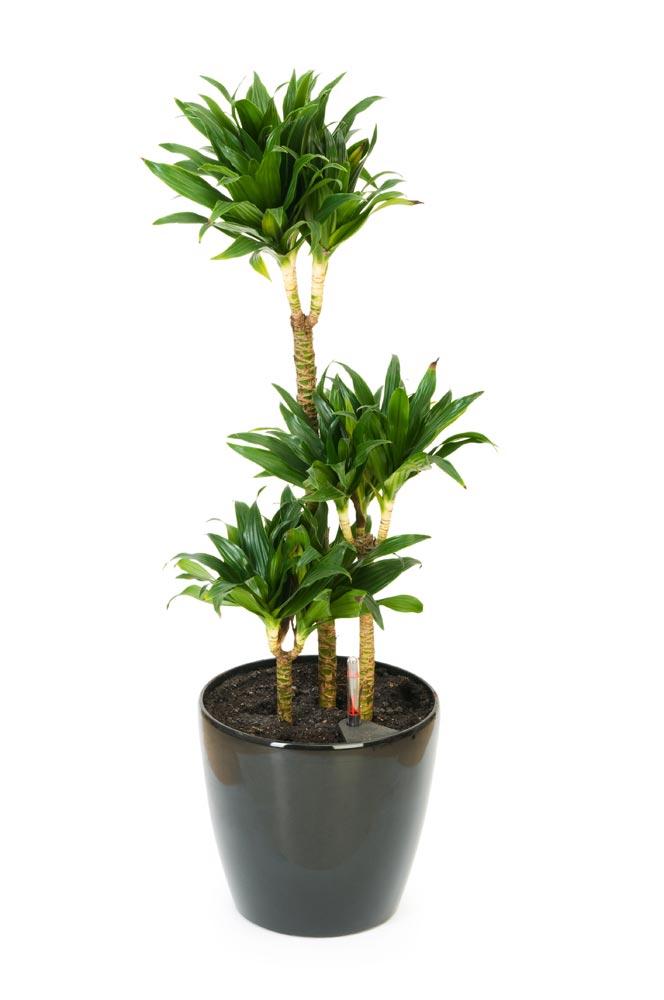 Sobno cveće: 5 biljaka koje se lako gaje i 5 zahtevnih za negu - Zena.rs
