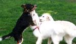 Naučite svog psa da šalje selfi